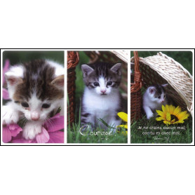 Carte simple Panoramique Courage - Psaume 23.4. Trio de chatons