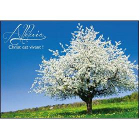 Carte simple Alléluia - Christ est vivant!