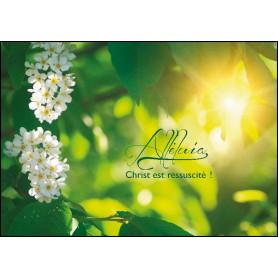 Carte simple Alléluia - Christ est ressuscité!
